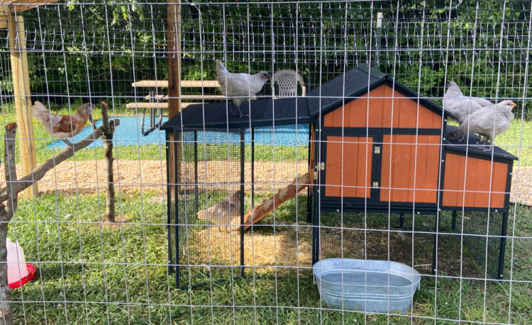 chicken coop with hens at Montgomery Subaru