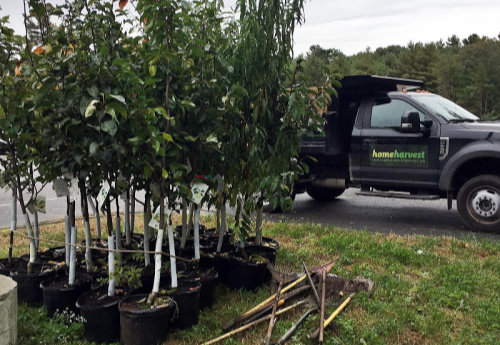 fruit trees shown with shovels and truck
