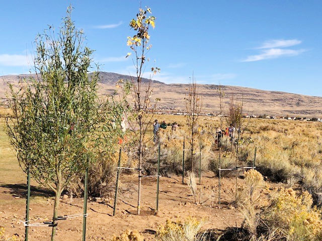 trees planted at a soccer park in Reno, NV